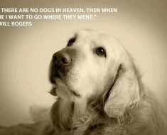 Quotes for Dogs | Dog quotes |Famous quotes about dogs